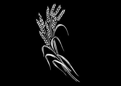 Z - BELYAN - Wheat LHS (3p633x6) R11