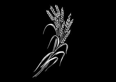 Z - BELYAN - Wheat RHS (3p633x6) R11