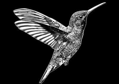 Z-COURTOREILLE - Bird (7p547x7p4) R4