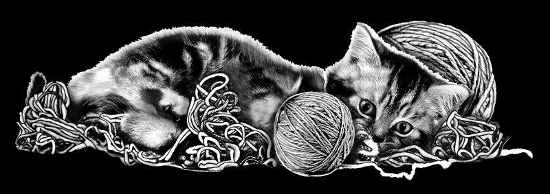 Z-DIXON-Kitten (3p863x1p367)R9