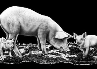 Z-DIXON-Pigs (3p737x1p527)R9