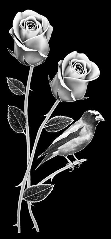 Z-ISAAC Roses (7p013x15)R13