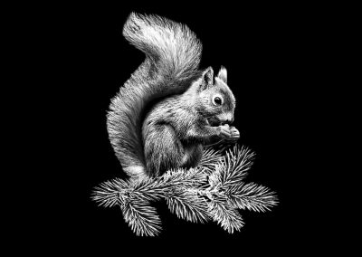 Z - JANTZ - Squirrel (5p888x6p933) R5