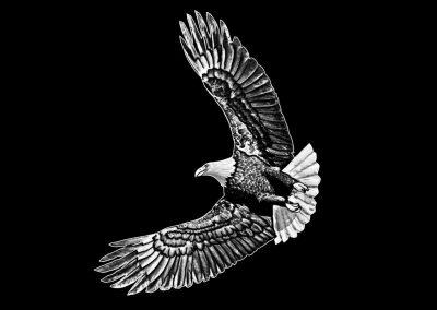 Z-KIYAWASEW - Eagle (3p89x4p617) R8