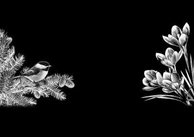 Z-MACAULEY -Bird&Flowers (18x7p92) R3