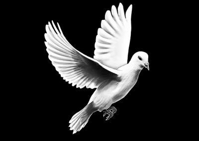 Z - MCGOVERN - His Side Dove (4p98x5p76) R10