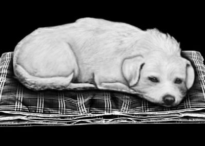 Z-MOLLOY - Dog (8x4p073) R5