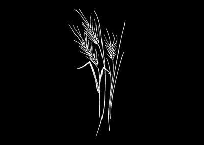 Z-NELMES - Wheat (3p875x7p734) R8