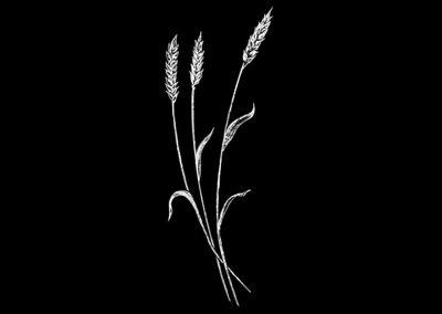 Z-ROSENAU - Wheat Left (2p653x5p97) R4