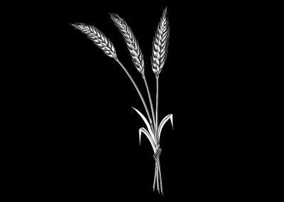 Z-ROSS- Wheat(5p887x10p383) R5