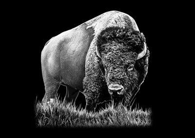 Z-STAGGS - Buffalo (5p017x5p177) R2