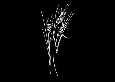 Z-STAGGS - Wheat (4p844x7p251) R2