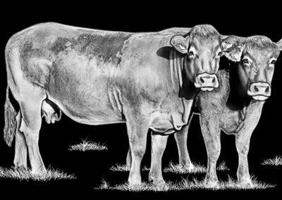 Z-SUTLEY-Cows Facing Right ( 7p77x4p51) R6
