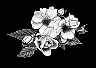 Z-WILTSE D - Flower (1) Split (6p747x5p147) R4